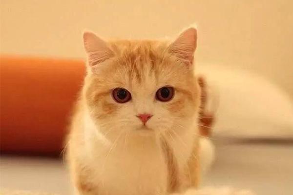 饲养动物重要知识,养猫还是需要手把手教养